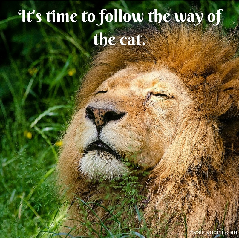 It's time to follow the way of the cat.